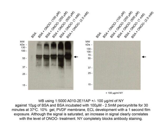 nitrotyrosine mAb clone
