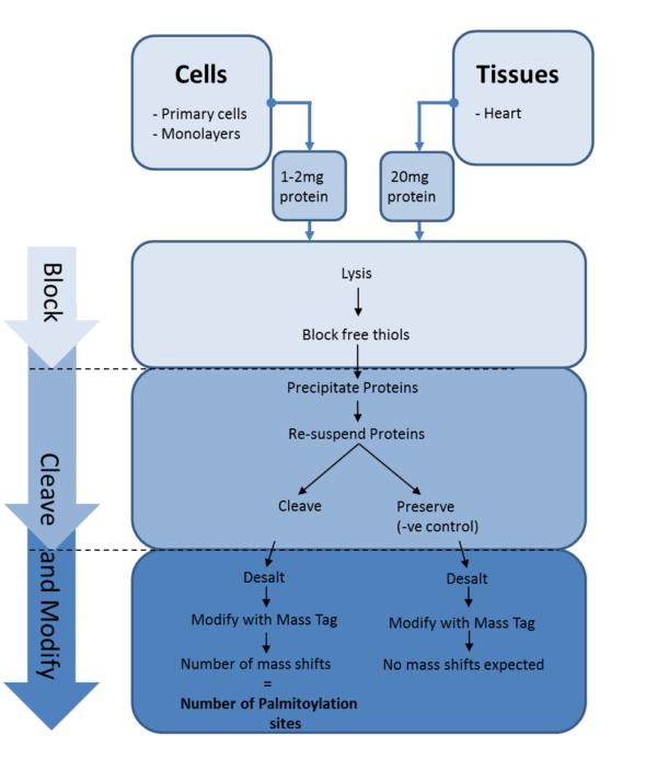 sitecounter spalmitoylated protein